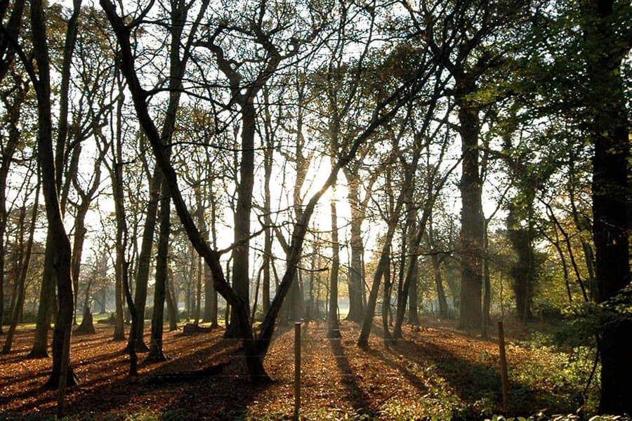 standing trees autumn woodland floor