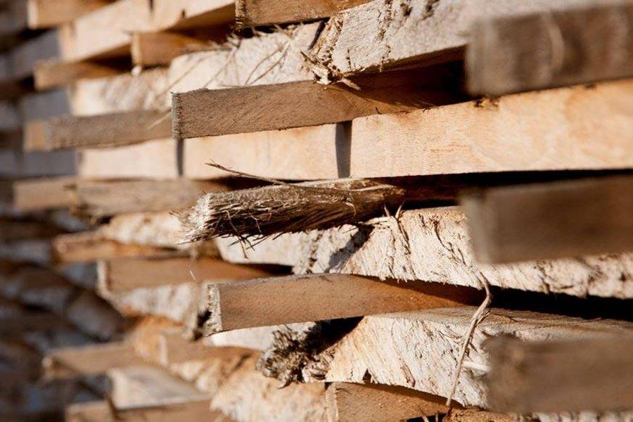 oak in stick