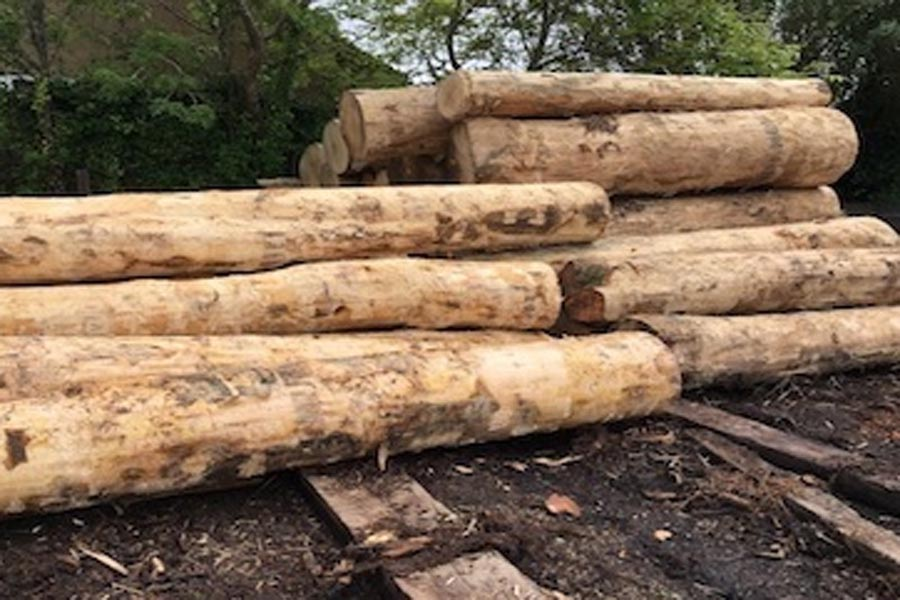 sycamore round logs